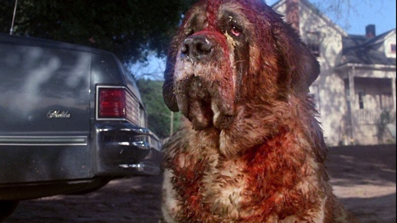 Rabid St. Bernard Cujo in the movie adaptation of the classic Stephen King novel (Courtesy: Warner Bros.)